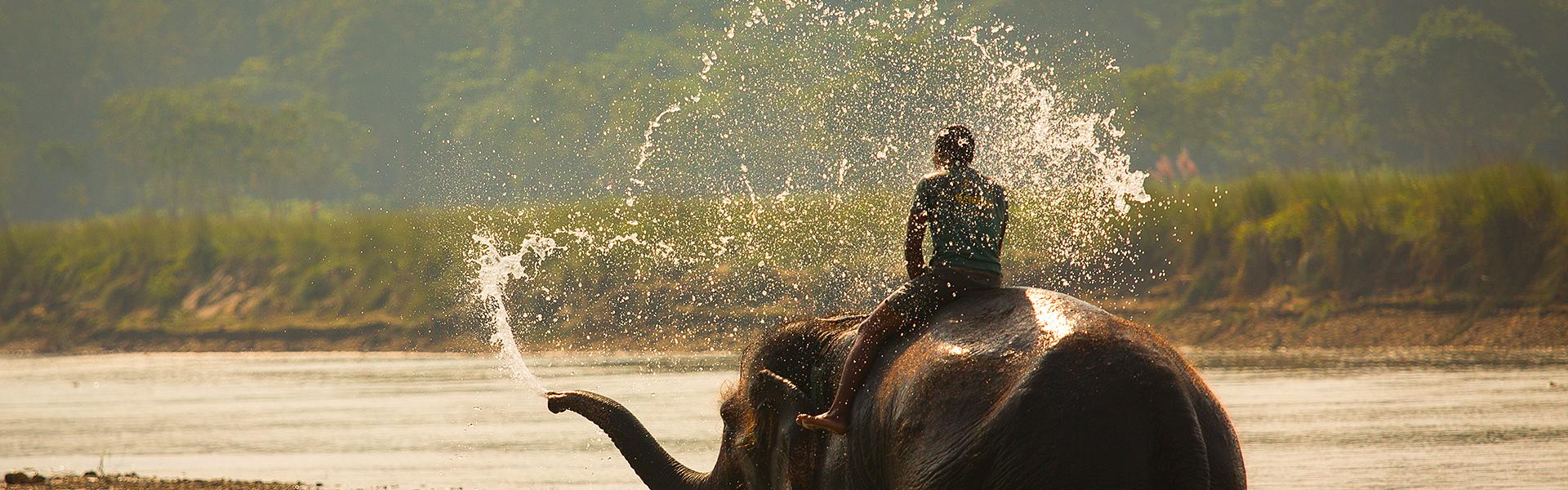 Indijas zilonis