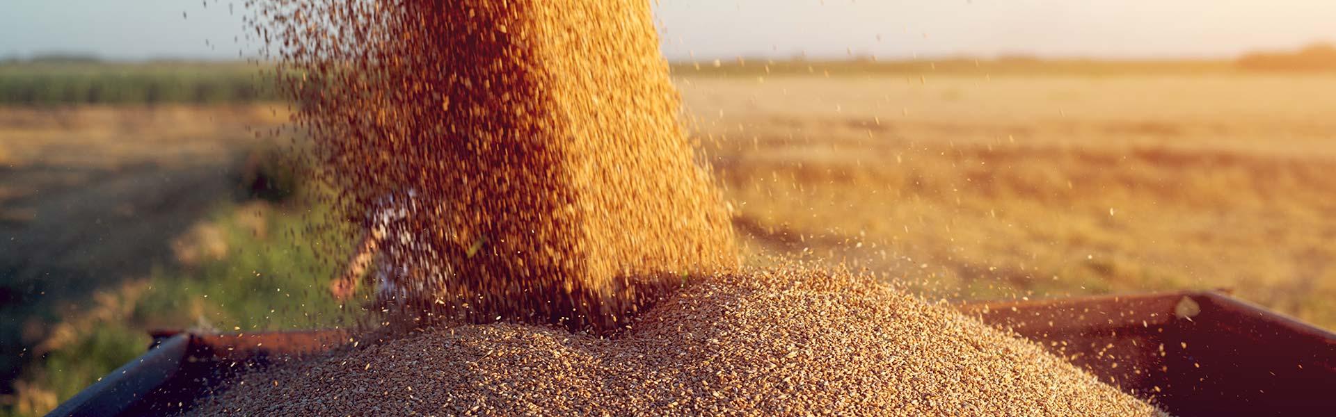 Iesaiste Latvijas lauksaimniecībā.